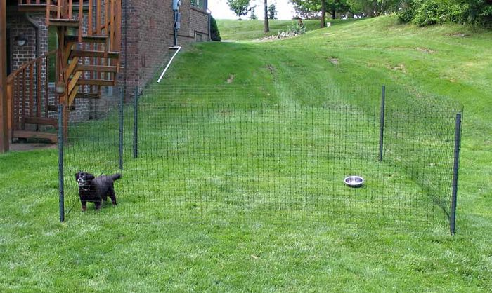 Keep Dog Away From Fence In A Small Yard